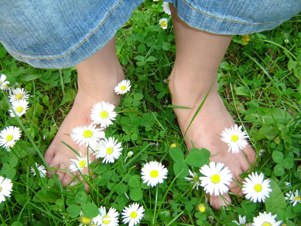 daisy-319695_1280
